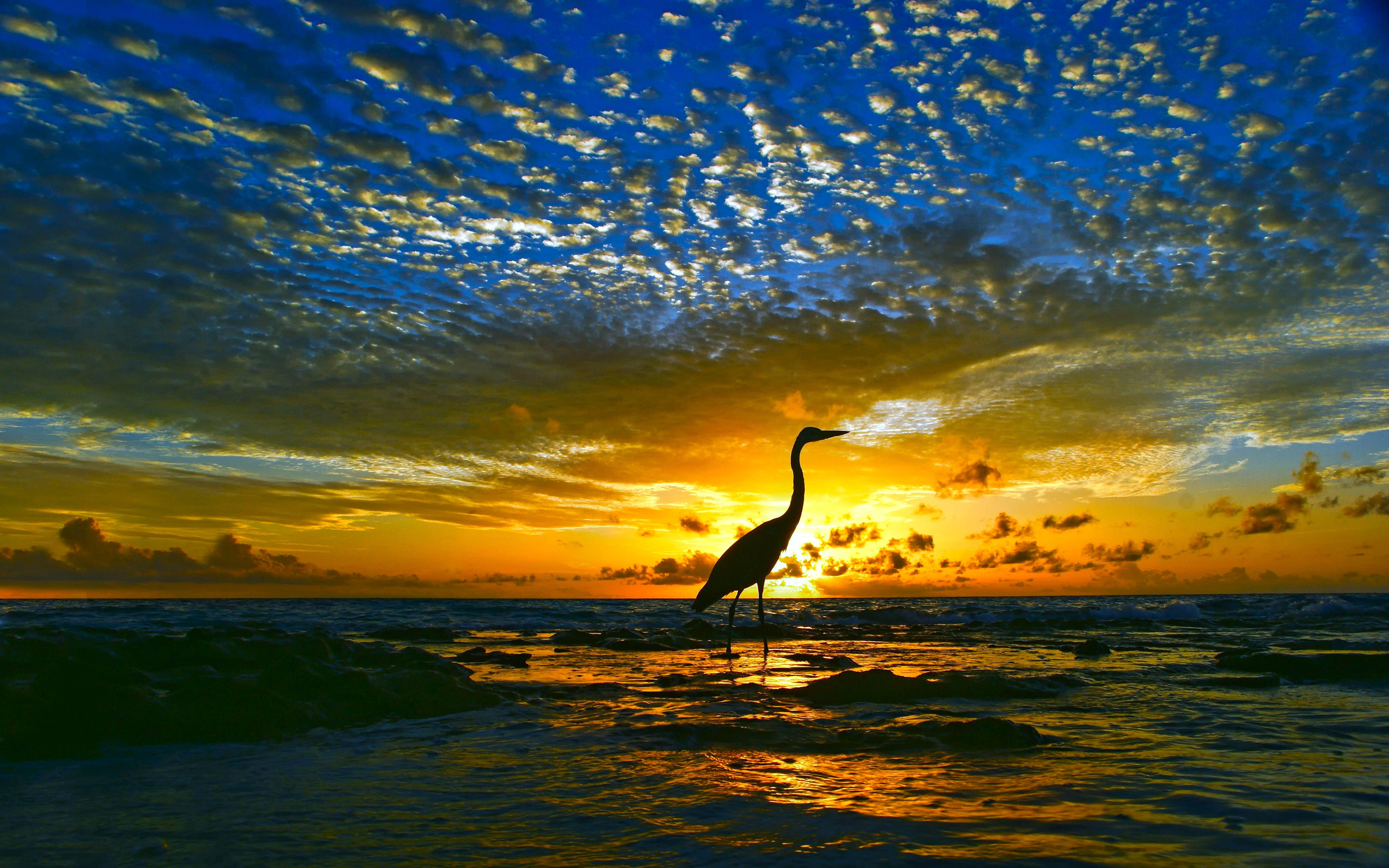 Bird 21 beachwalker sunsetbird 26april2013friday for Fond d ecran gratuit wiko