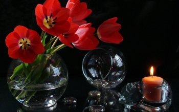 Photography - Still Life Wallpapers and Backgrounds ID : 398690