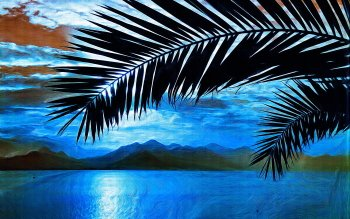 Tierra - Palm Wallpapers and Backgrounds ID : 400103