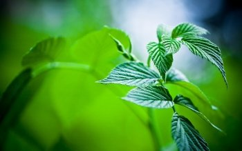 Earth - Leaf Wallpapers and Backgrounds ID : 401689