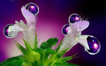 Earth - Water Drop Wallpapers and Backgrounds ID : 402848