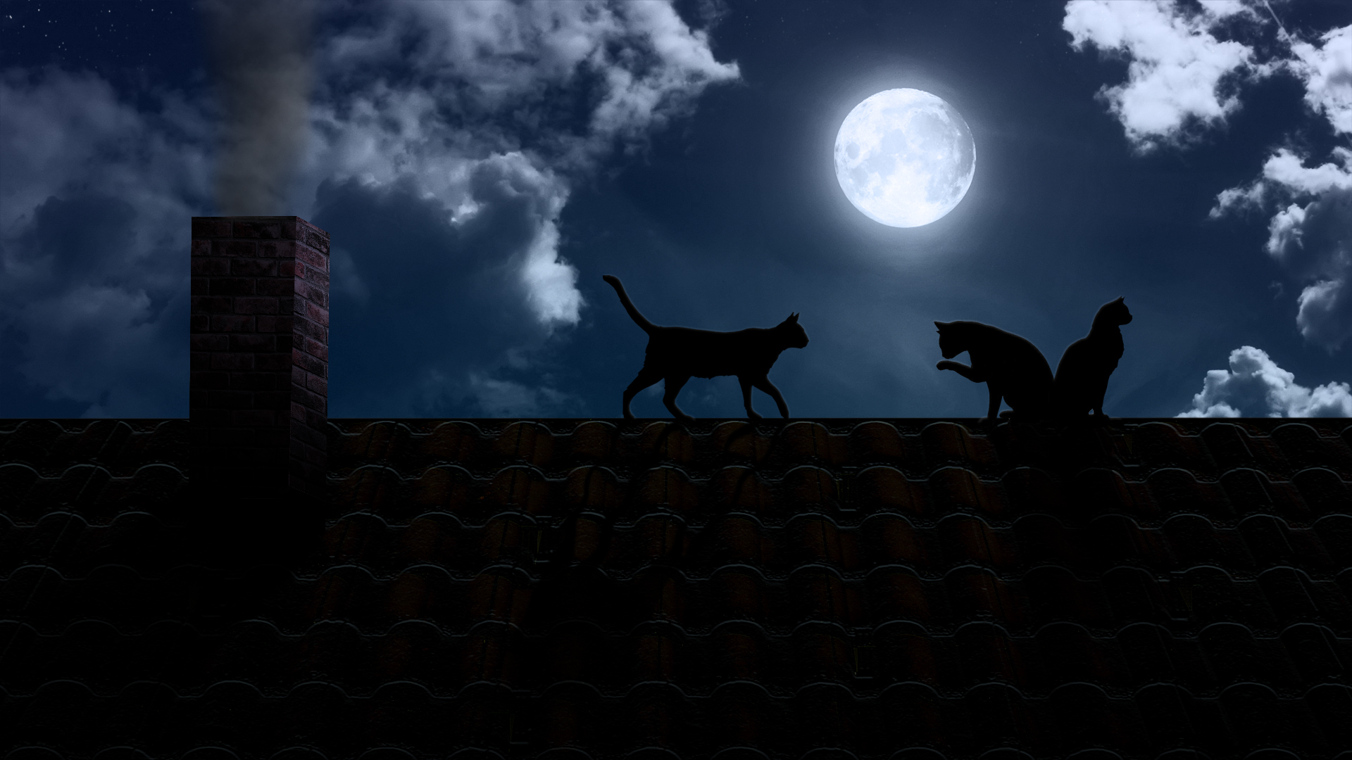 Best Wallpaper Night Cat - 404532  Collection.jpg