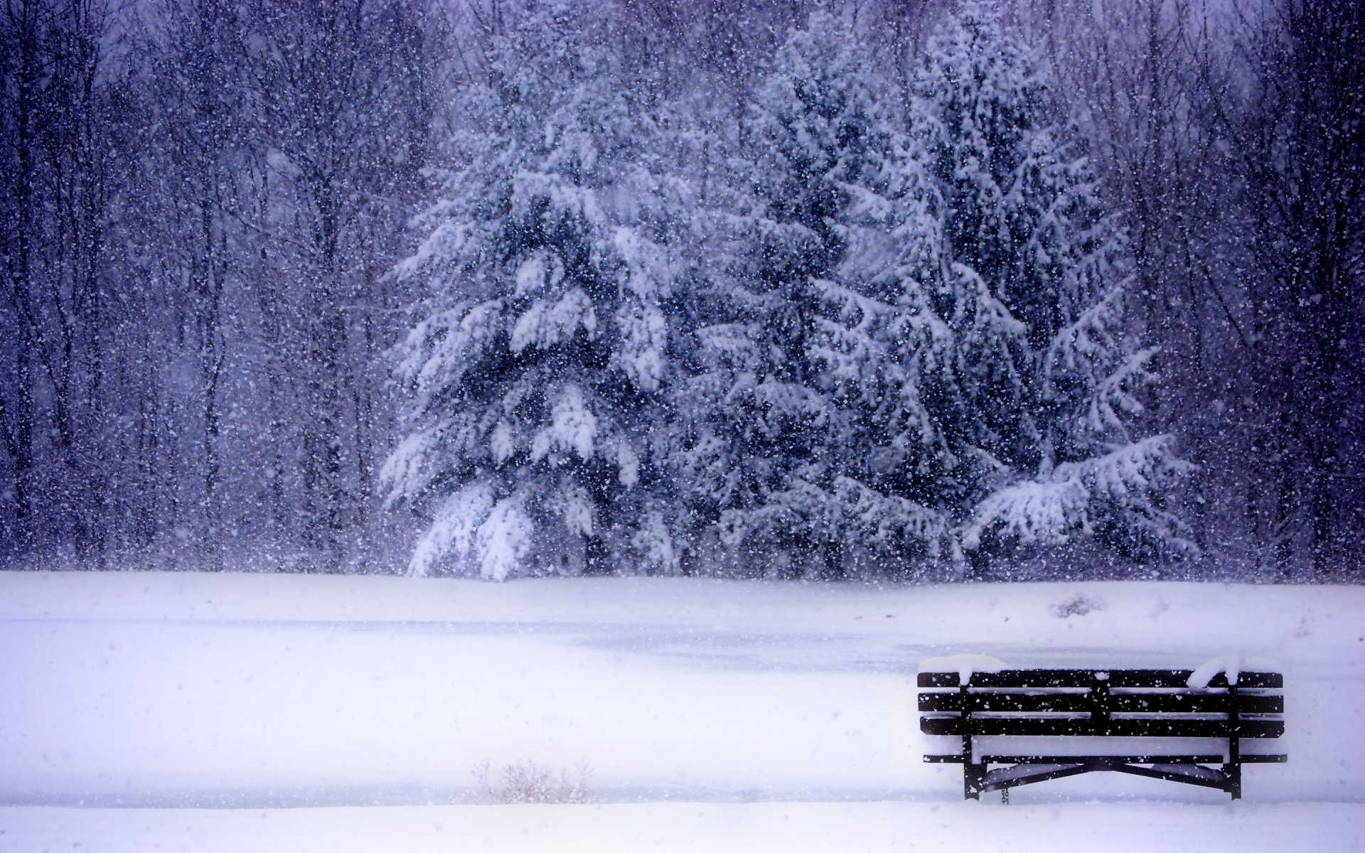 Photography - Winter  Wallpaper