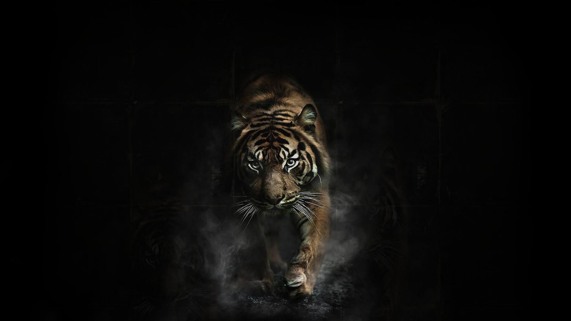 1164 Tygrys Tapety HD | Tła - Wallpaper Abyss - Strona 8