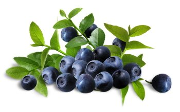 Nahrungsmittel - Blueberry Wallpapers and Backgrounds ID : 405136