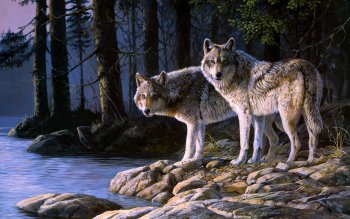 Animal - Wolf Wallpapers and Backgrounds ID : 405997
