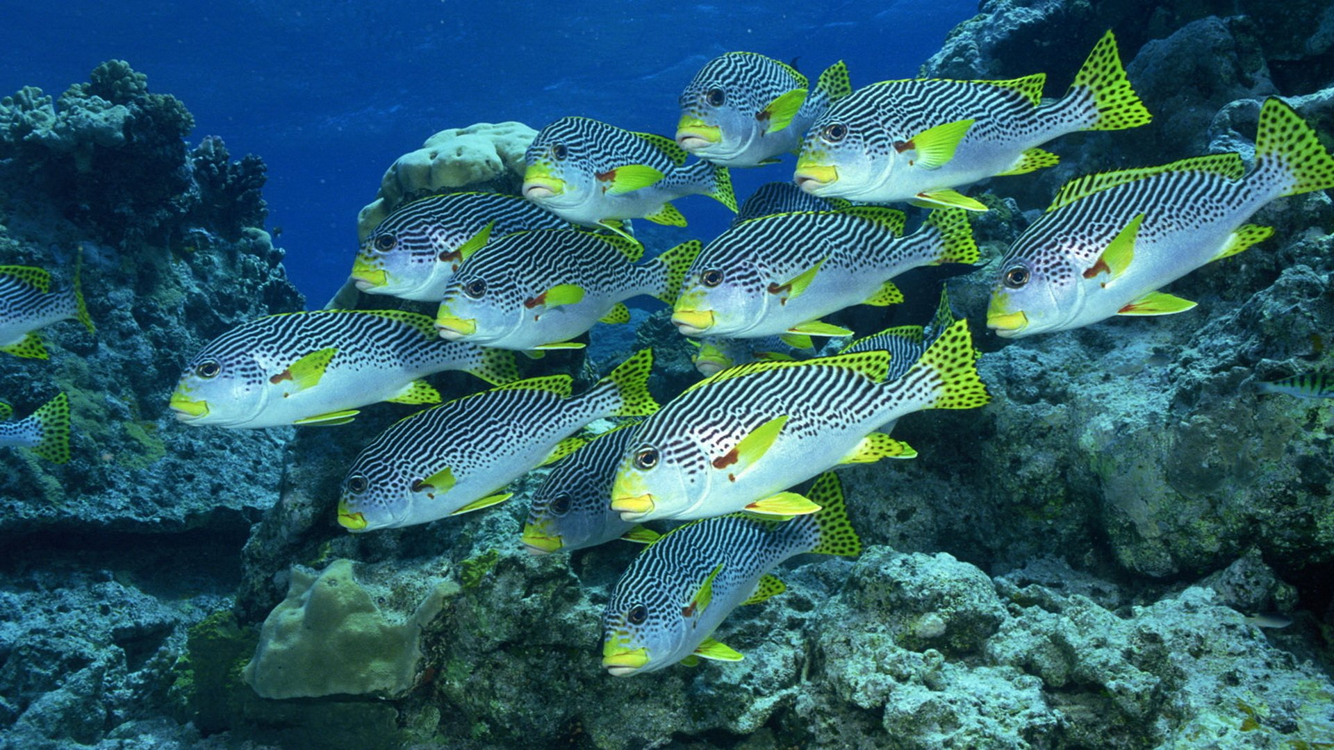 512 Fish HD Wallpapers | Background Images - Wallpaper Abyss