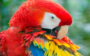 Animalia - Macaw Wallpapers and Backgrounds ID : 406310