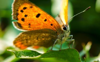 Animal - Butterfly Wallpapers and Backgrounds ID : 406518