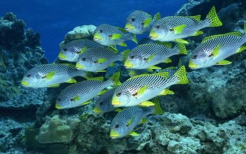 Animal - Fish Wallpapers and Backgrounds ID : 406550