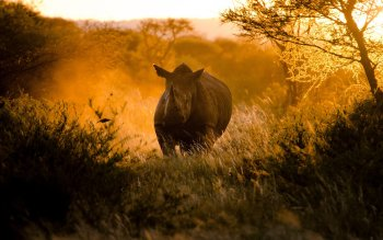 Animal - Rhino Wallpapers and Backgrounds ID : 406821