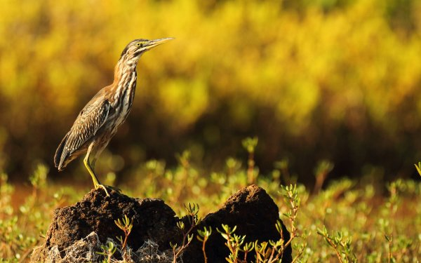 Animal Bird Birds HD Wallpaper | Background Image