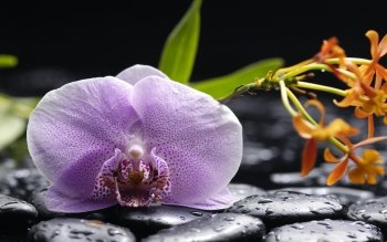 Wallpaper orchidee steine  237 Orchidee HD Wallpapers | Hintergründe - Wallpaper Abyss