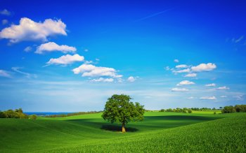 Erde - Baum Wallpapers and Backgrounds ID : 410009