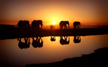 Animalia - Elefante Wallpapers and Backgrounds ID : 410044