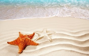 87 Starfish HD Wallpapers