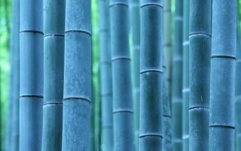 Tierra - Bamboo Wallpapers and Backgrounds ID : 410589