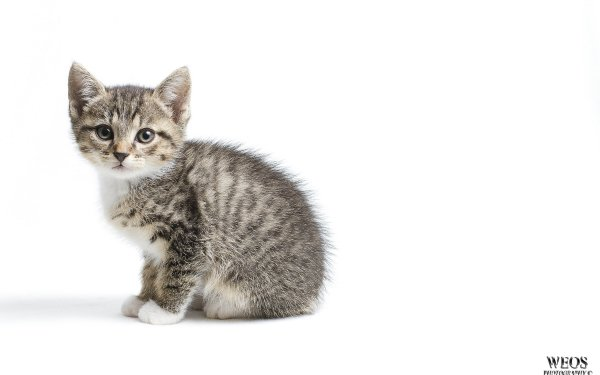 Animal Cat Cats HD Wallpaper | Background Image