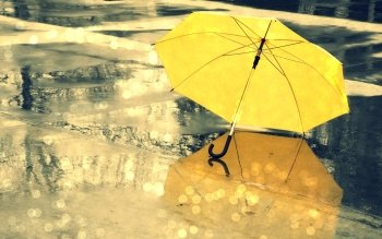 Photography - Umbrella Wallpapers and Backgrounds ID : 412257
