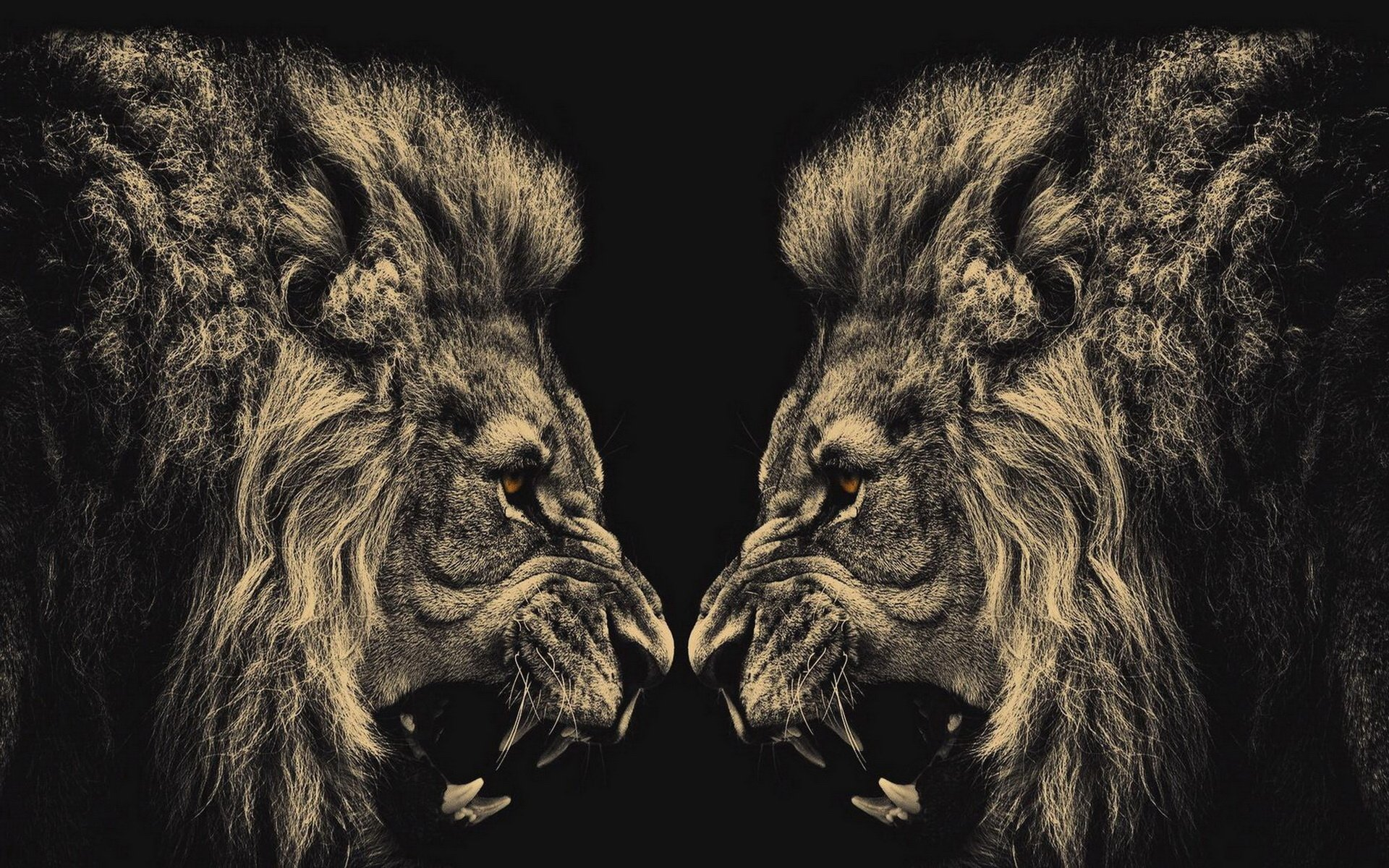 Animal - Lion  Wallpaper
