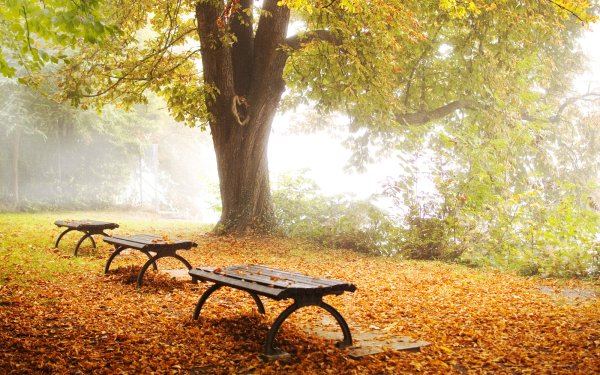 Man Made Bench HD Wallpaper | Background Image
