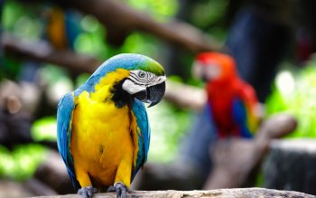 Animalia - Macaw Wallpapers and Backgrounds ID : 414198