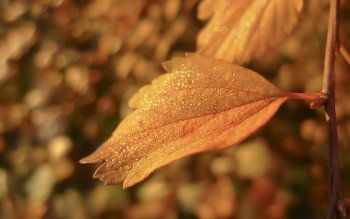 Earth - Leaf Wallpapers and Backgrounds ID : 414868