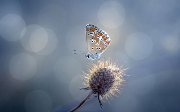 Animal - Butterfly Wallpapers and Backgrounds ID : 414943