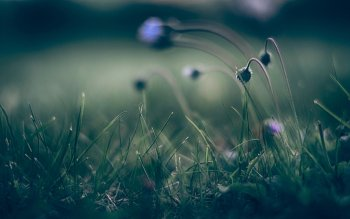 HD Wallpaper | Background Image ID:415204