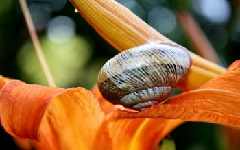 Animal - Snail Wallpapers and Backgrounds ID : 416132