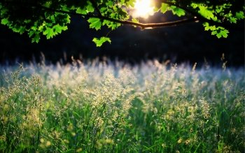Earth - Grass Wallpapers and Backgrounds ID : 416340