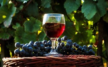 Food - Wine Wallpapers and Backgrounds ID : 417971