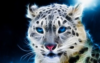 Djur - Cheetah Wallpapers and Backgrounds ID : 419298