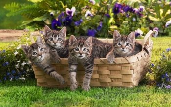 Animal - Cat Wallpapers and Backgrounds ID : 419528