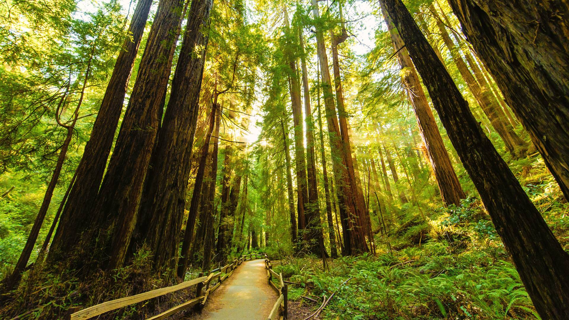 Redwood Forest Background 1280x1024