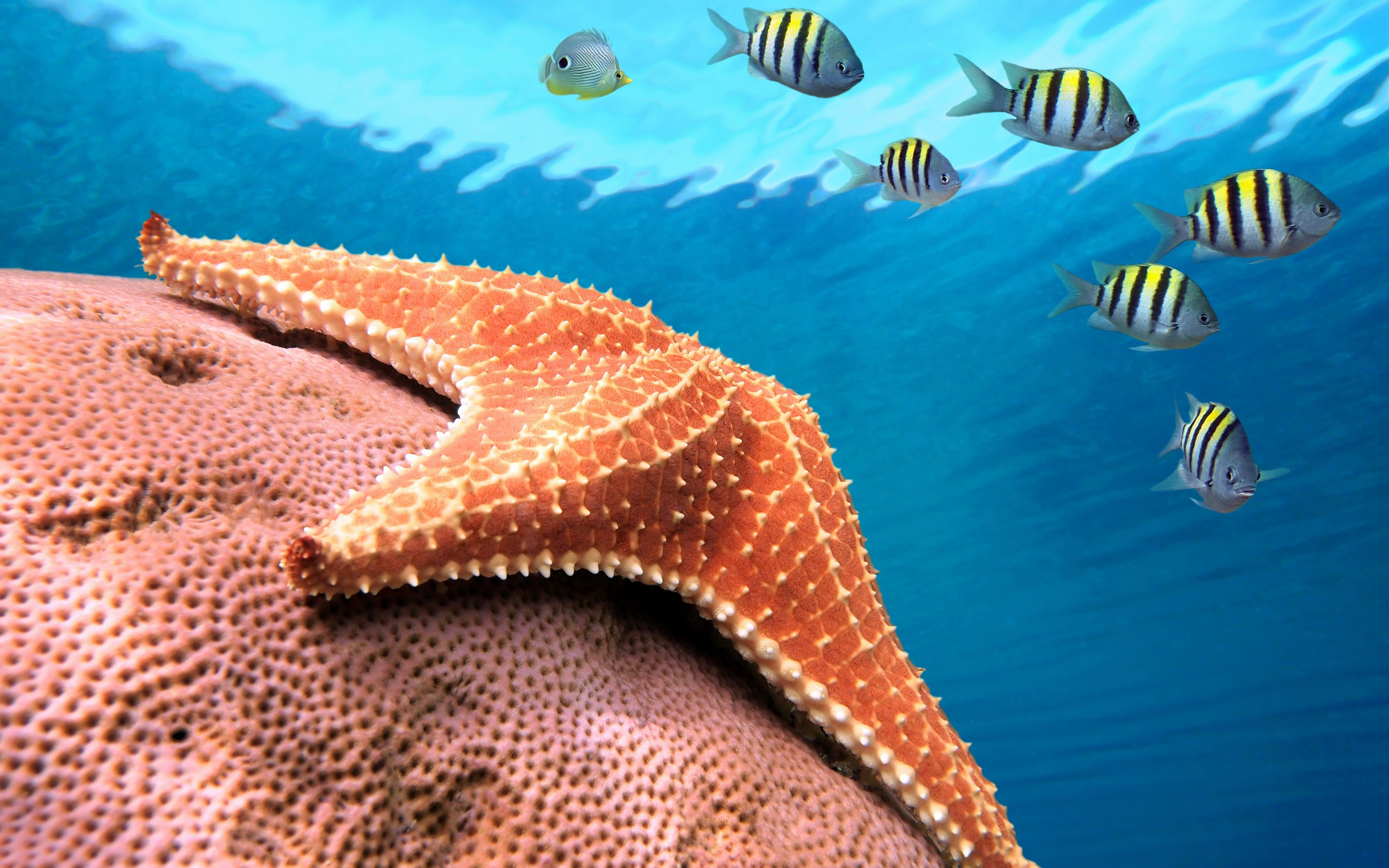 81 starfish hd wallpapers backgrounds wallpaper abyss