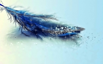 Artistisk - Feather Wallpapers and Backgrounds ID : 422583