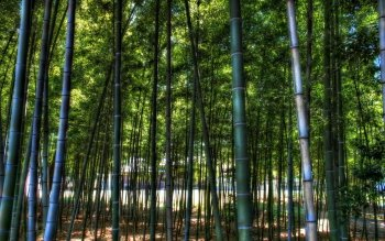 Tierra - Bamboo Wallpapers and Backgrounds ID : 422599