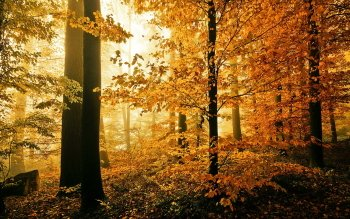 Aarde - Herfst Wallpapers and Backgrounds ID : 422614