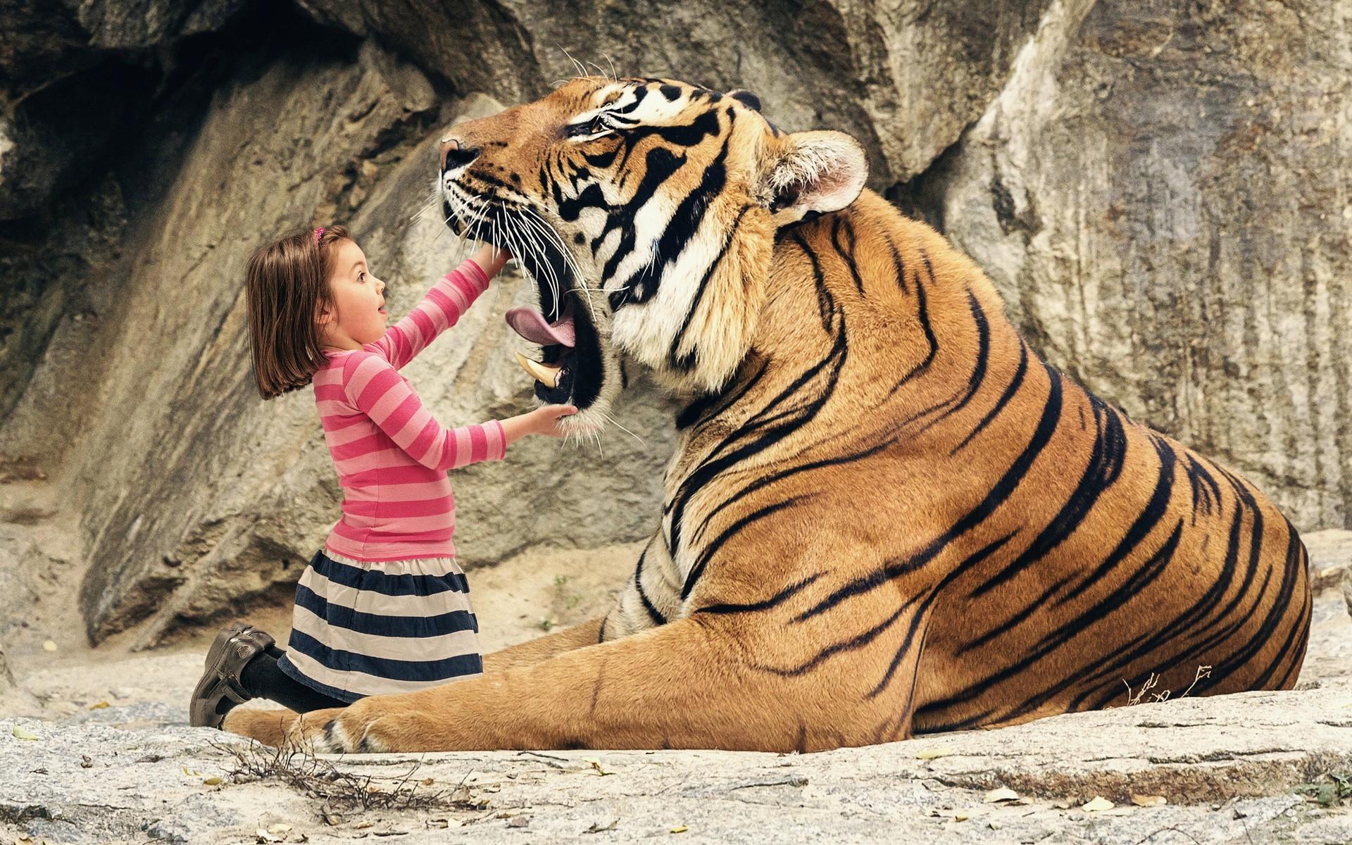 Desktop Hd Tiger Attack Pics: A Bit Curious, And A Bit Afraid Full HD Wallpaper And