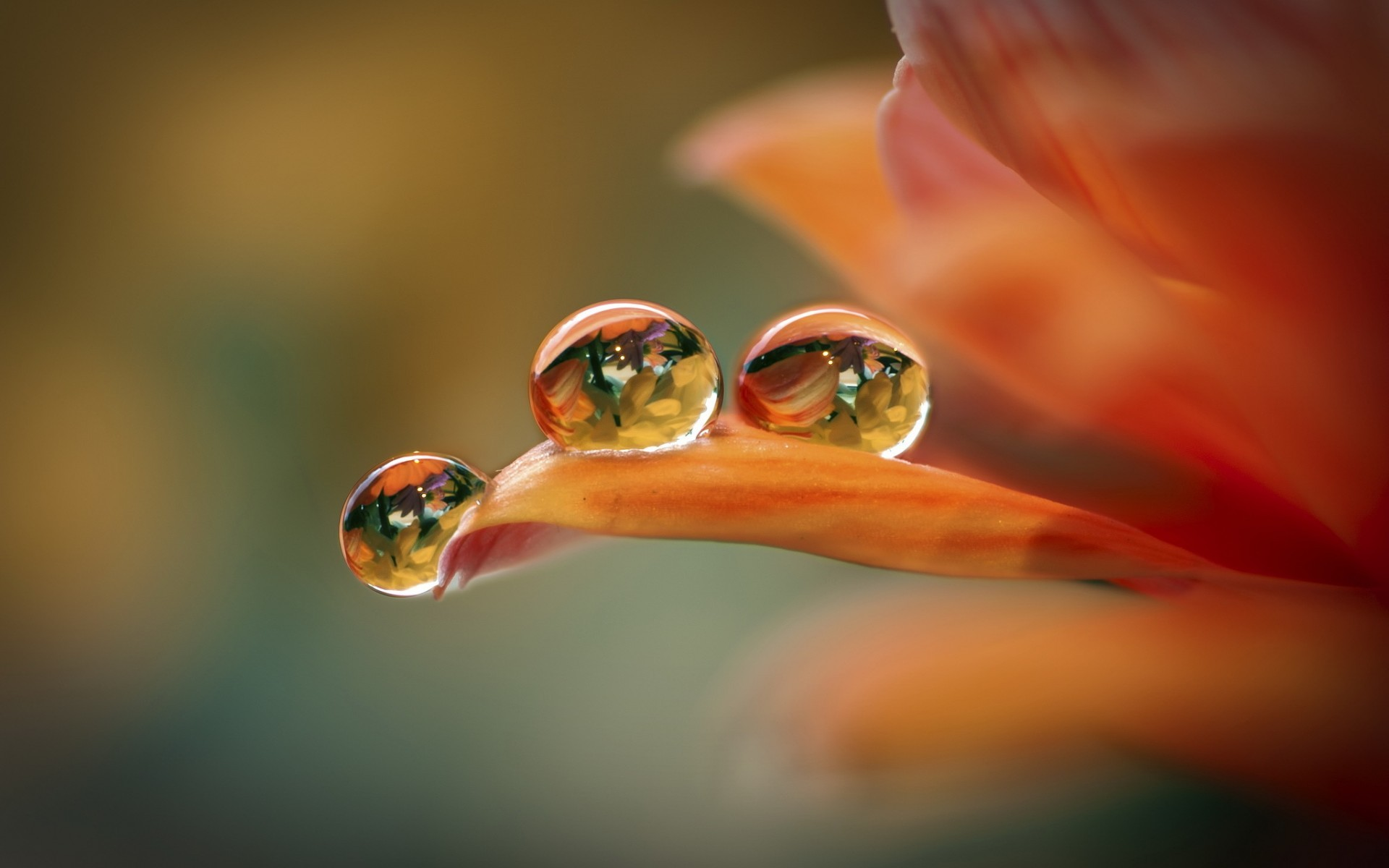 Water Drop Hd Wallpaper Background Image 1920x1200 Id 424482