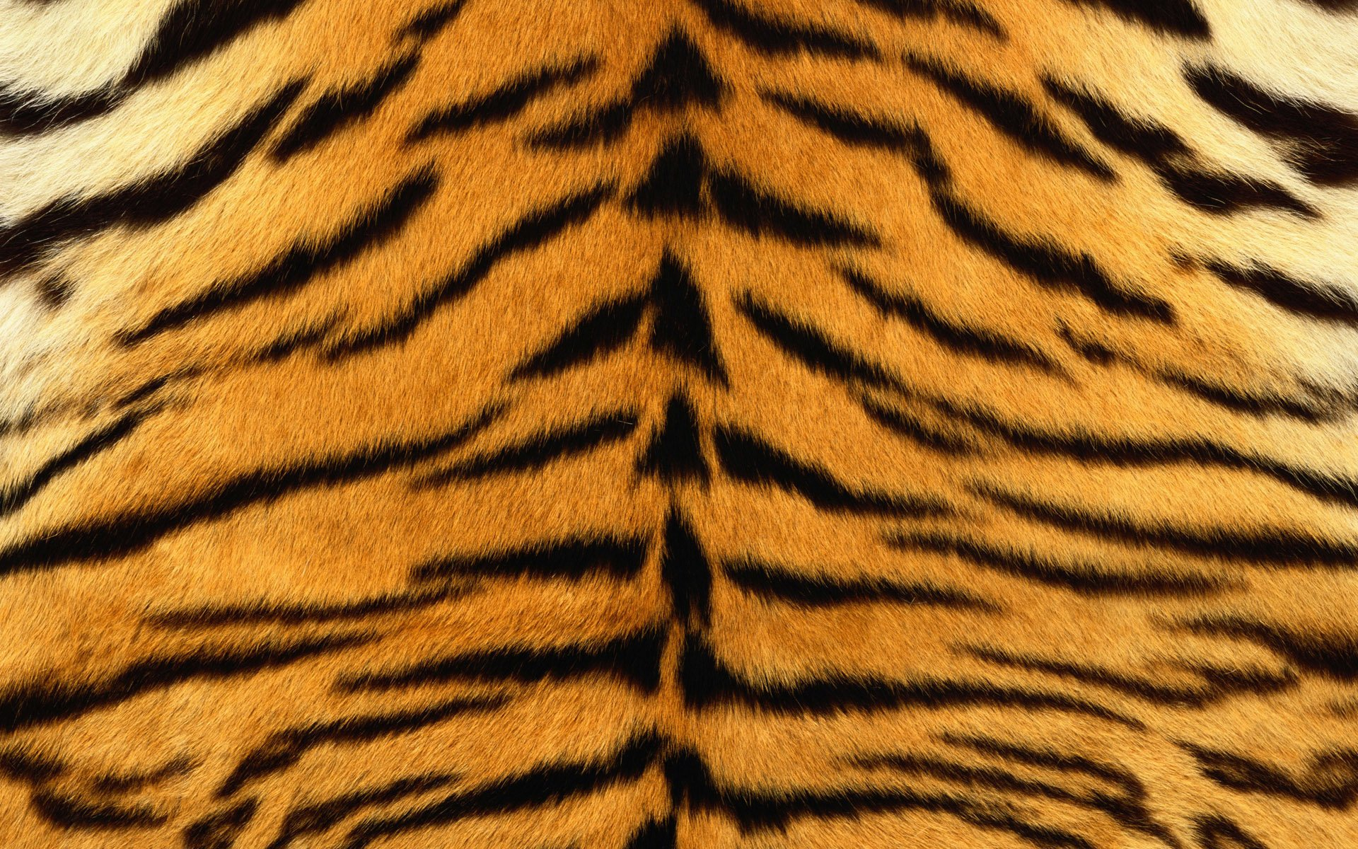Tiger Print Full HD Wallpaper And Background Image