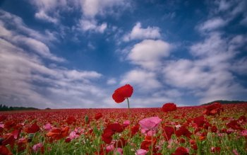 Earth - Poppy Wallpapers and Backgrounds ID : 425310