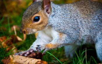 Animal - Squirrel Wallpapers and Backgrounds ID : 426744