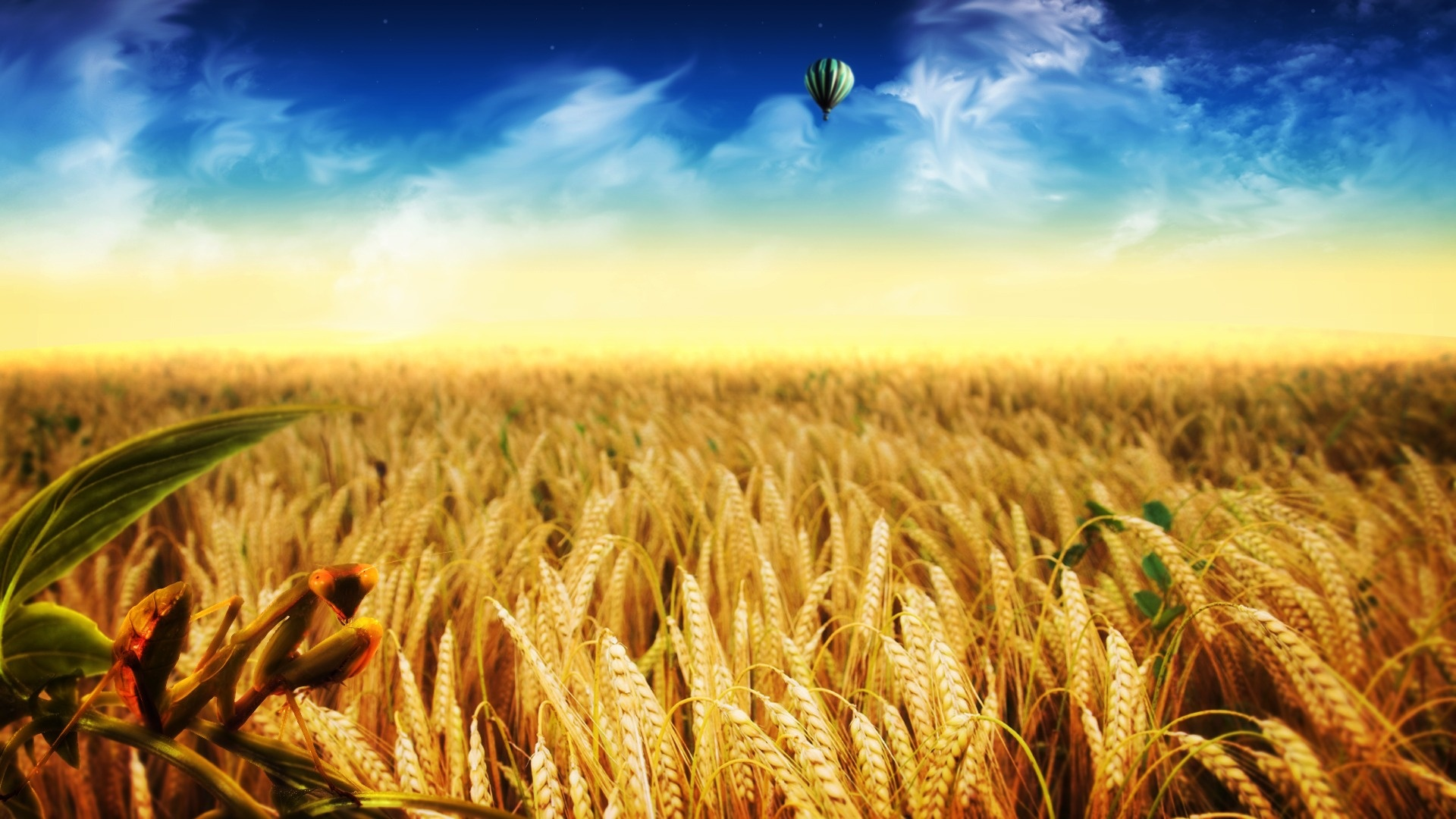 1 Cornfield HD Wallpapers | Backgrounds - Wallpaper Abyss