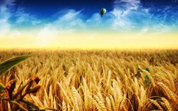 Artistic - Cornfield Wallpapers and Backgrounds ID : 427254