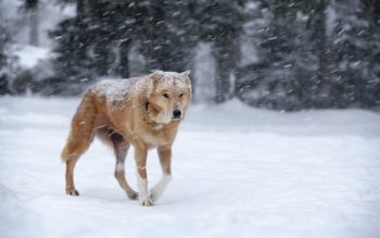 Animal - Dog Wallpapers and Backgrounds ID : 428123