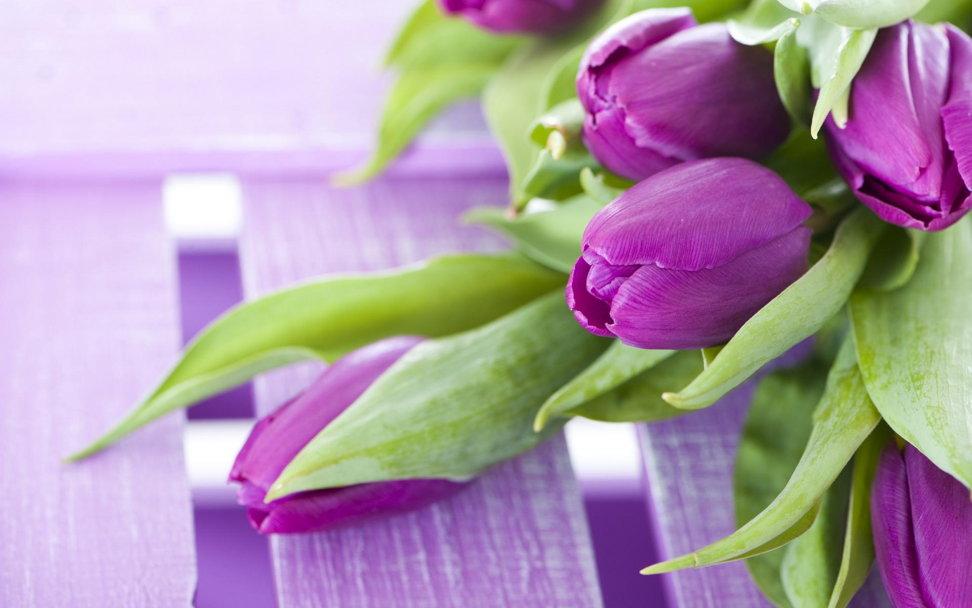 Tulipe Fond d'écran HD | Arrière-Plan | 1920x1200 | ID ...