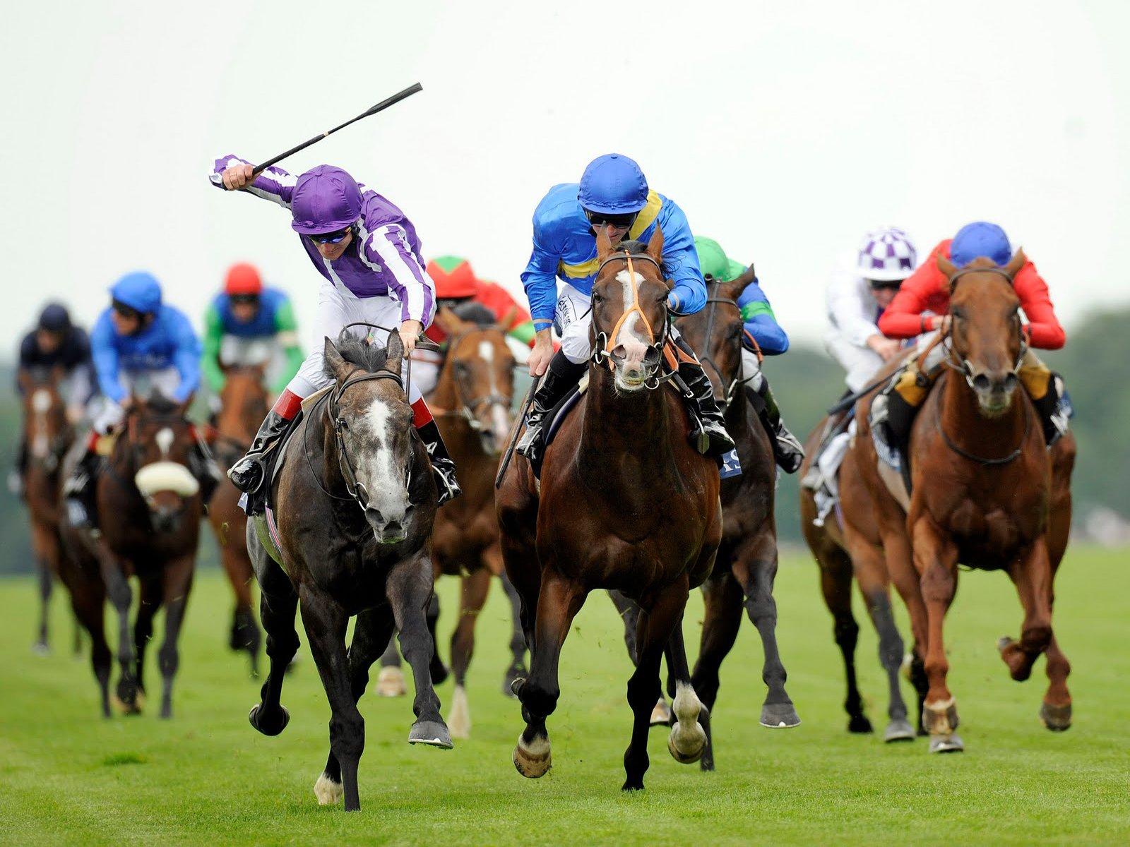 Fondos De Pantalla Carreras Proibidas: Horse Racing Fondo De Pantalla And Fondo De Escritorio