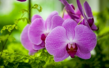 Earth - Orchid Wallpapers and Backgrounds ID : 430140